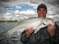 Striped Bass Fish Caught by Fisherman in San Francisco Bay