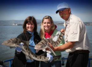 Shark Fishing Charters in San Francisco