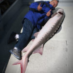 Great White Sturgeon Fishing on San Francisco Bay
