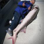 Great White Sturgeon Fishing on San Francisco Bay