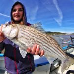 Striped Bass Caught in San Francisco