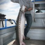 San Francisco Guided Sturgeon Fishing Charter