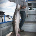 San Francisco Guided Sturgeon Fishing Charter