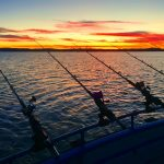 Guided Fishing Trips on San Francisco Bay