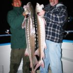 Guided Sturgeon Fishing in San Francisco