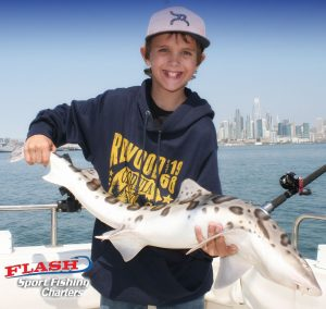 San francisco fishing charters report 8 2 17 flash for Sf bay striper fishing report